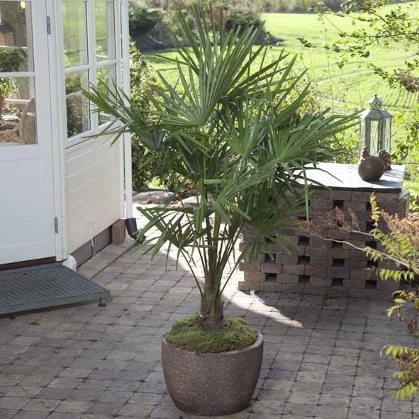 palmer i stuen