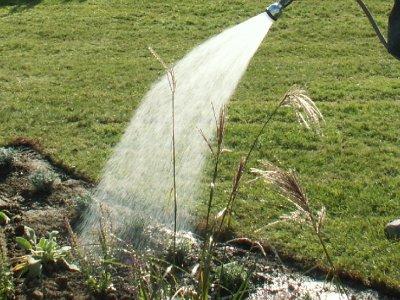 Vanding efter plantning