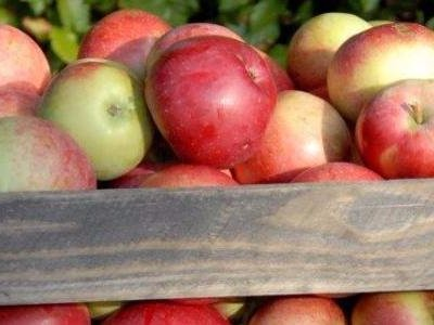 Æbler til den sprøjtefrie have